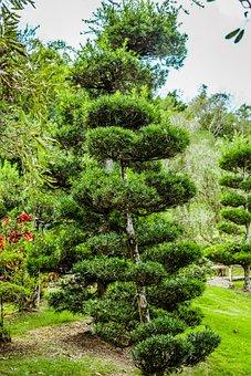 Flowers, Trees, Grass, Lake, Park, Garden, Path, Nature