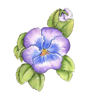 Violet, Flower, Watercolor, Viola, Purple Flower