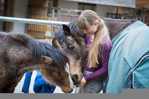Horses, Ponies, Riding Pony, Foal, Girl, Female, Mare