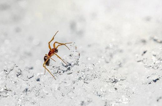 Spider, Snow, Ice, Close-Up, Nature