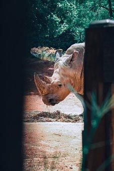 Rhino, Zoo, Animal, Mammal, Nature, Wildlife, Safari