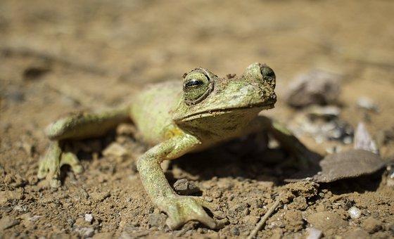 Frog, Nature, Animal, Ecosystem, Zoology, Wildlife