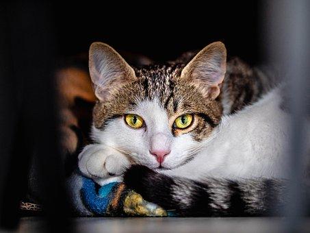 Animals, Cats, Homes, Domestic, White