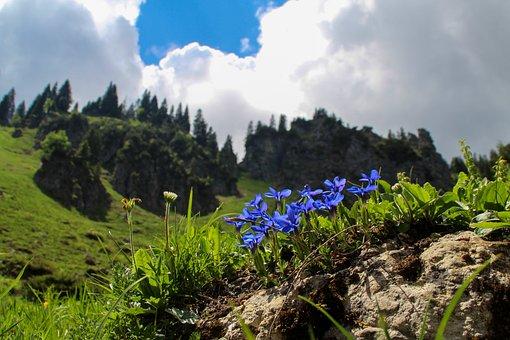Mountain, Flowers, Clouds, Nature, Alpine, Crocus