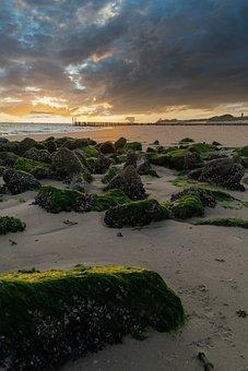 Coast, Beach, Sunset, Sand, Moss, Rocks, Seashore