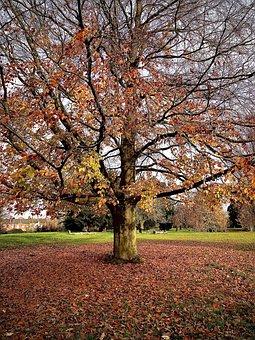 Autumn, Leaves, Fall, Nature, Tree, Colorful, Foliage