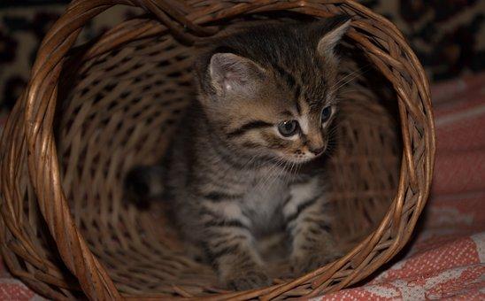 Kitten, Cat, Animals, Cute, Portrait, Feline, Kitty