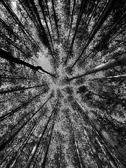 Nature, B W, Trees, Reaching, Focal Point, Practice