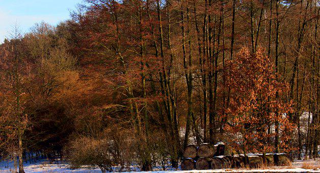 Forest, Straw, Winter, Landscape