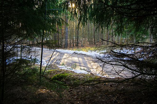 Forest, Spruce, Road, Morning, Spring, Nature