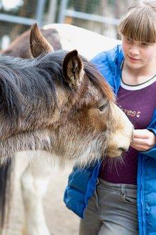 Foal, Girl, Feeding, Feed, Horse, Pony, Animal, Curious