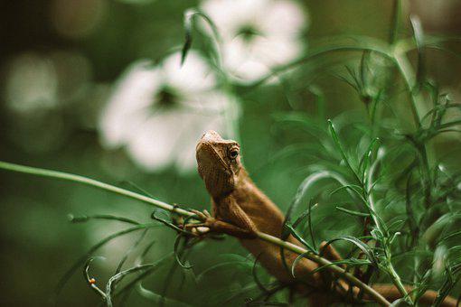 Iguanas, Schuppenkriechtier, Lizard, Exotic, Iguana