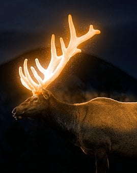 Deer, Reindeer, Moose, Glowing Deer