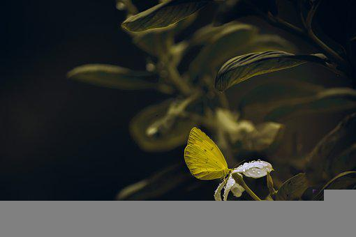 Butterfly, Flower, Pollinate, Pollination