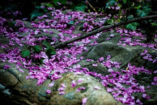 Rock, Petals, Flowers, Plants, Lilac, Purple, Fallen