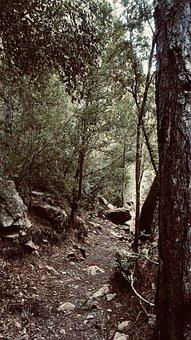 Forest, Jungle, Travel, Wild, Nature, Landscape, Hiking