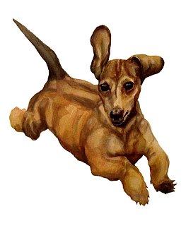 Wiener, Dog, Puppy, Hotdog, Dachshund, Daschund