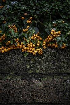 Orange, Berry, Berries, Fruit, Nature, Growing, Red