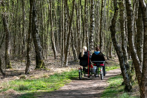 Road, Bike, Forest Path, Trees, Cyclists, Bicycle Tour