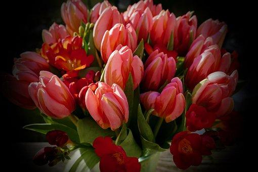Frühling, Blumen, Spring, Flower, Nature, Blooming