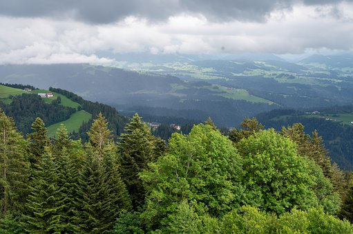 Trees, Forest, Lake Constance, Germany, Clouds, Pledges