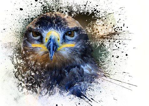 Bird, Falcon, Head, Raptor, Animal, Plumage, Wildlife