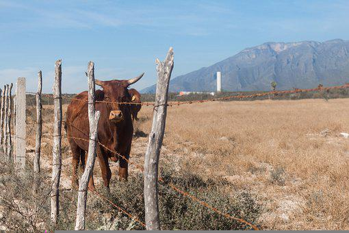 Ranch, Country, Cowboy, Farm, Texas, Western, Barn