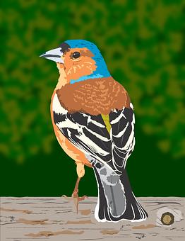 Finch, Bird, Animal, Nature, Feather, Plumage, Wildlife