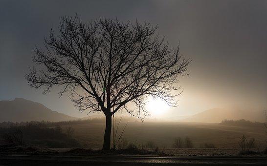 Tree, Field, Sunrise, Silhouette, Fog, Mist, Sunlight