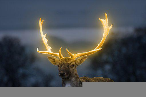 Glow, Deer, Fores, Light, Animal, Fantasy, Glowing