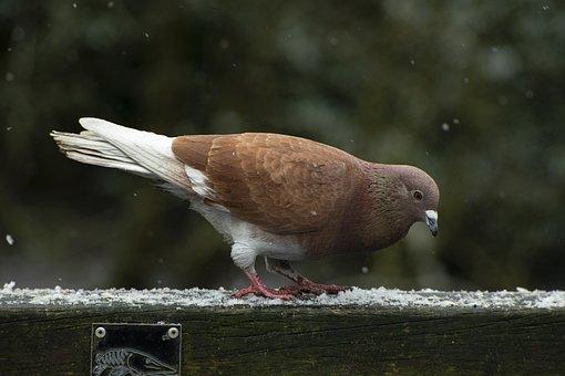 Snow, Winter, Ice, Blizzard, Bird, Brown, Light, Common