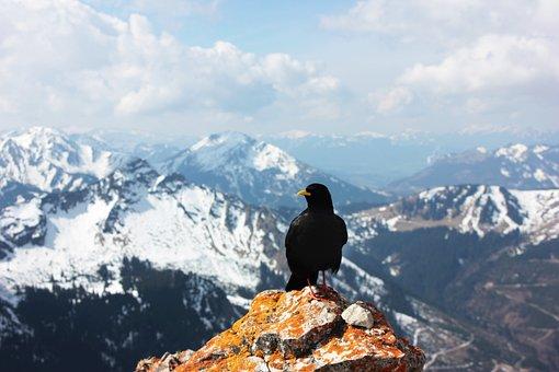 Chough, Mountains, Hiking, Tannheimertal, Alpine, Tyrol