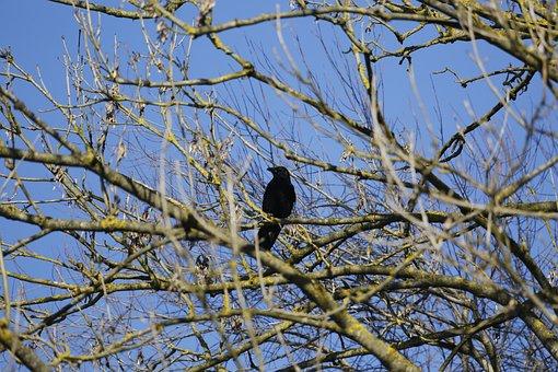 Crow, Bird, Bill, Raven Bird, Raabe, Mystical