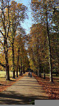 Trees, Leaves, Forest, Tree, Autumn, Nature