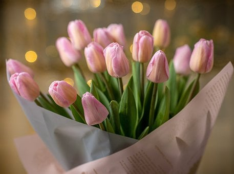Tulips, Flowers, Bouquet, Pink Tulips, Pink Flowers