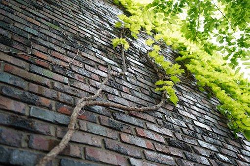 Ivy, Leaves, Brick, Vine, Plants, Wall, Nature, Block