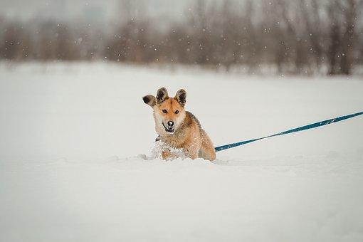 Dog, Winter, Playing, Playful, Walk, Leash, Pet