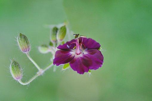Flower, Plant, Buds, Petals, Purple Flower