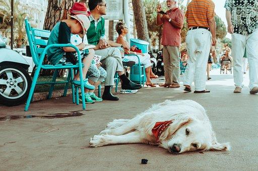 Dog, Street, People, Park, Crowd, Pet, Animal, Rest