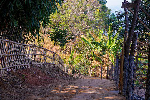 Road, Pathway, Fence, Trees, Bangladesh, Sajek Valley