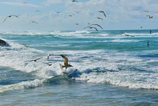 Beach, Seagulls, Fly, Flight, Flying Seagulls, Flock