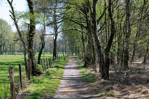 Trees, Path, Fence, Demarcation, Trail, Woods
