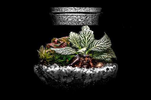 Tree, Little, Glass, Glass Bottle, Moss