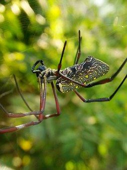 Insect, Spider, Macro, Wildlife, Nature, Arachnid