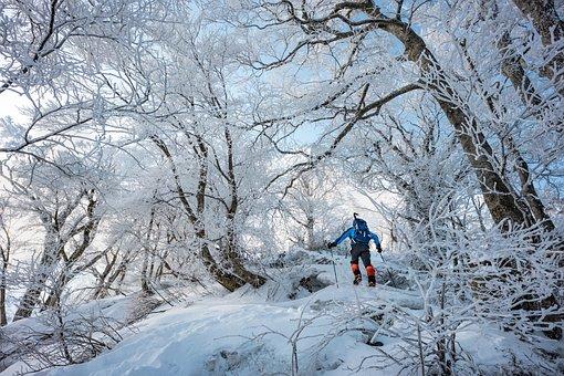 Landscape, Winter Mountain, Rime, Beech Shrub Forest