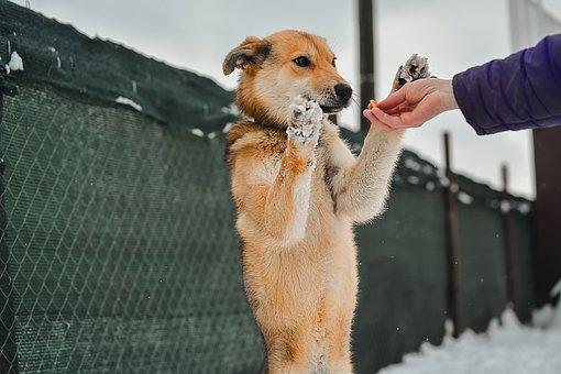 Dog, Winter, Playing, Playful, Pet, Red Dog, Young Dog