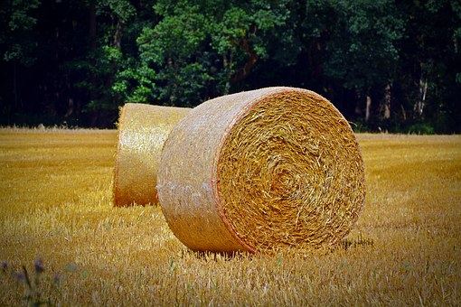 Straw Bales, Round Bales, Agriculture, Straw, Landscape