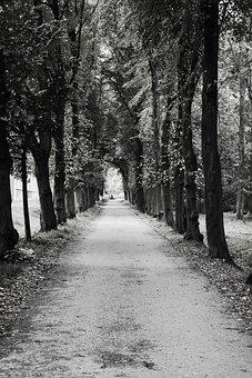 Avenue, Trees, Away, Road, Hemming, Autumn