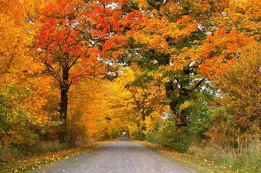 Autumn, Avenue, Trees, Away, Road, Tree Lined Avenue