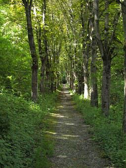 Forest Path, Avenue, Hanson, Bad Mergentheim